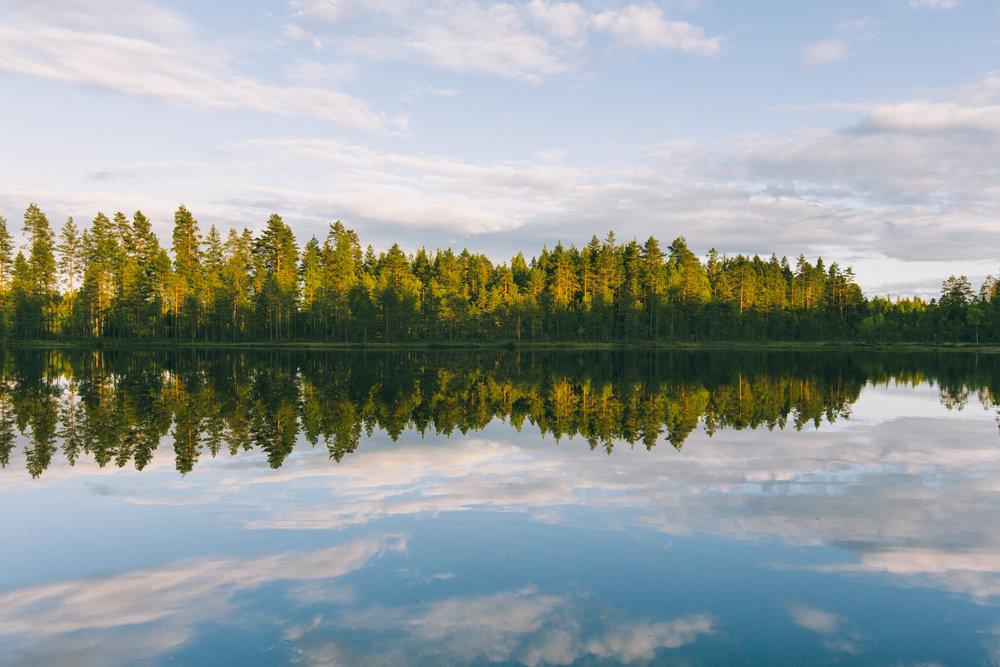 metsä ja lampi kesällä.jpg