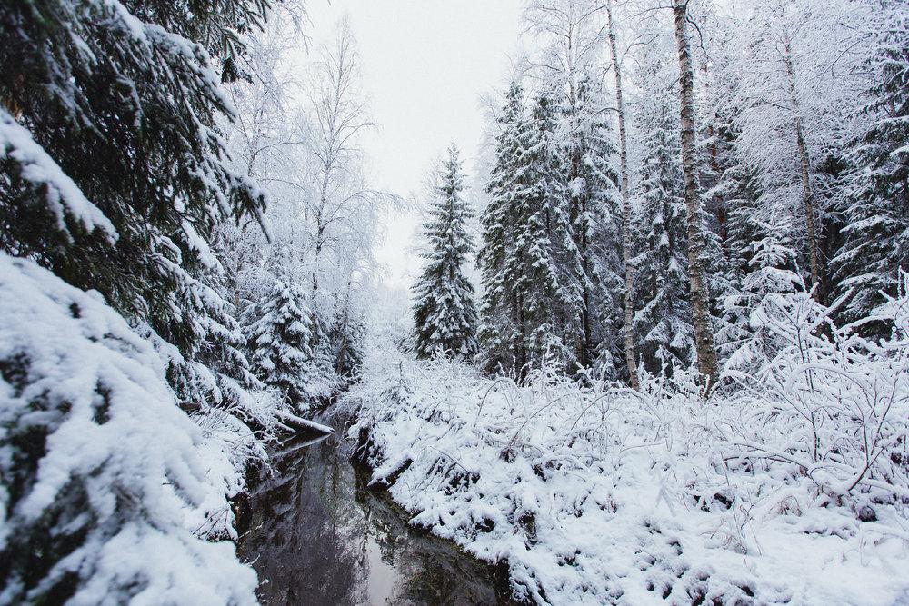 metsä talvella.jpg