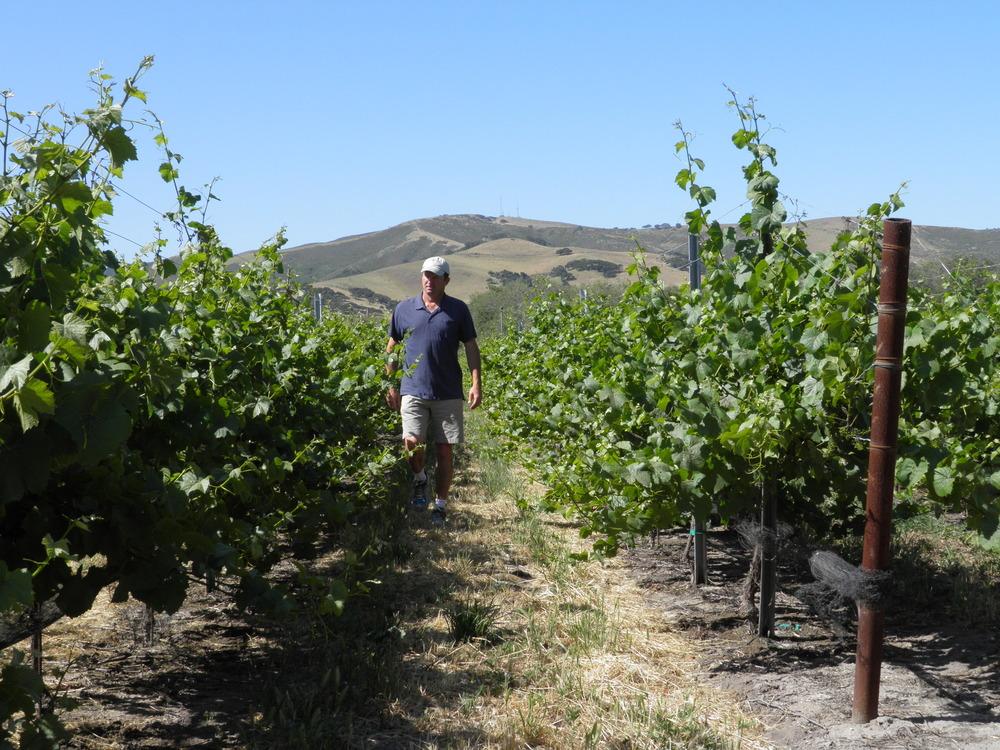 Nick Morello, Winemaker