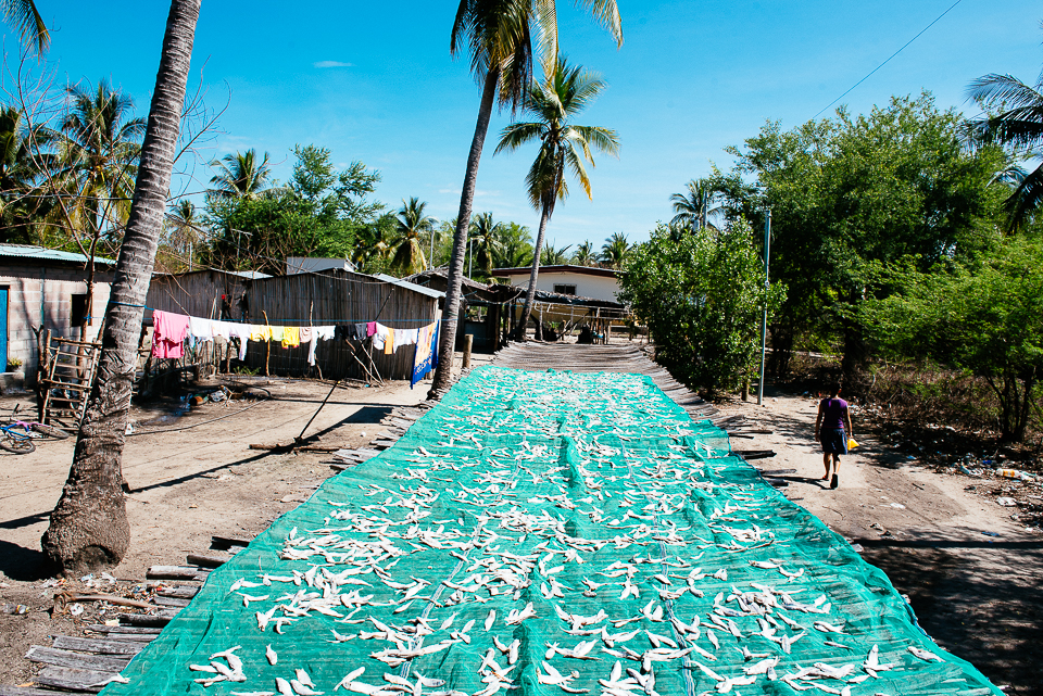 Once caught, local fishermen dry sardines on a raised platform about six feet in the air.