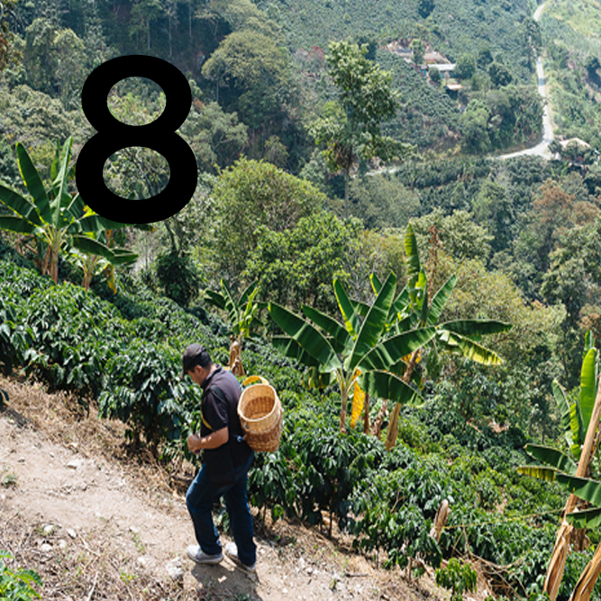 Colombia itinerary day 8: tour of a coffee farm