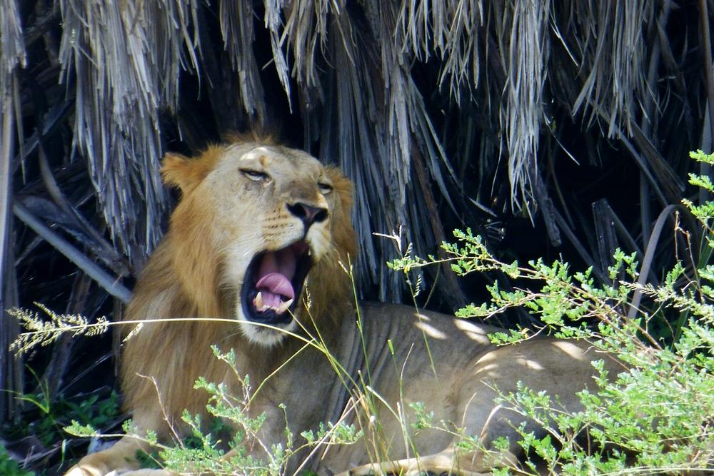 Credit: breakdown safaris