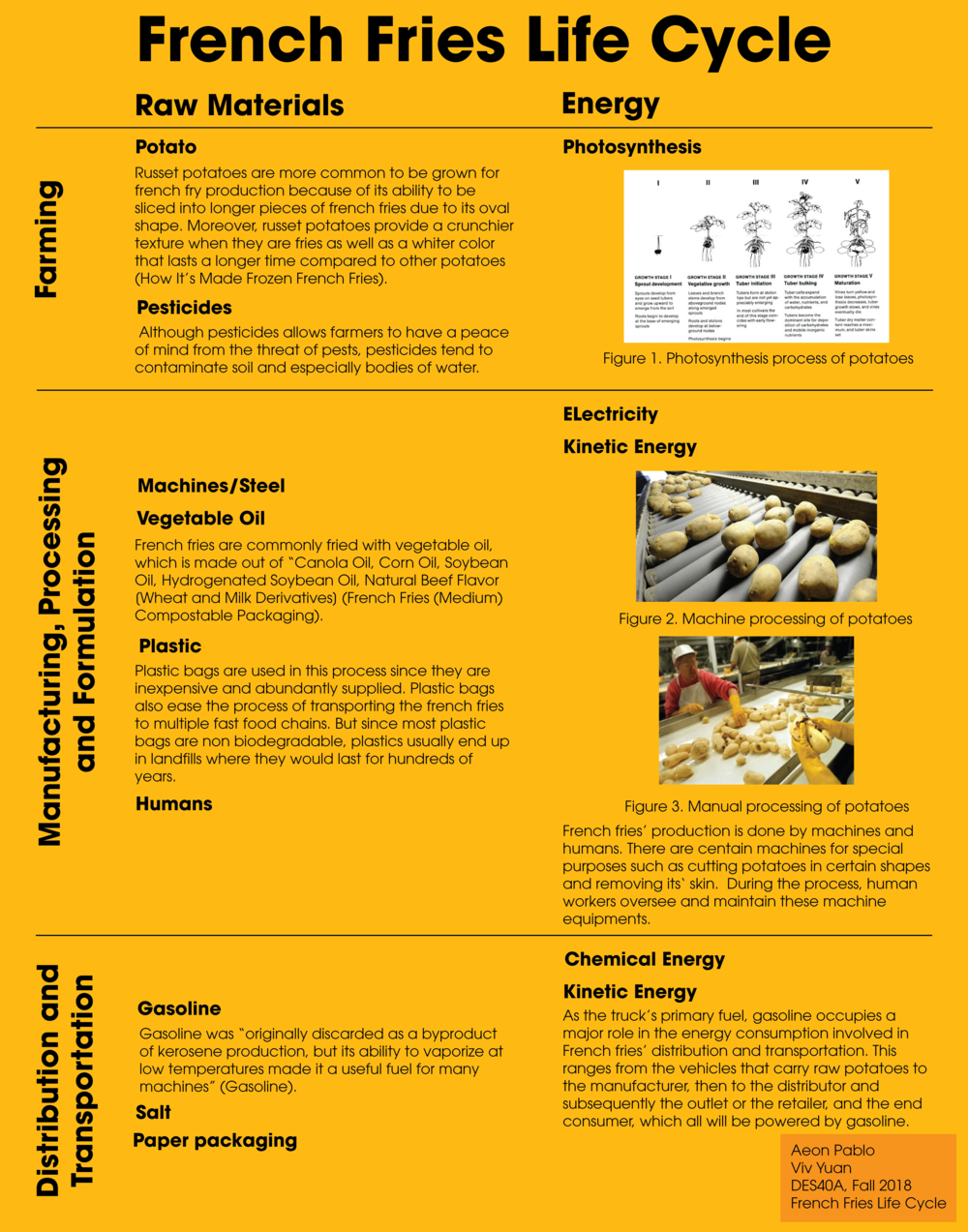 French Fries Life Cycle Posterpng.png