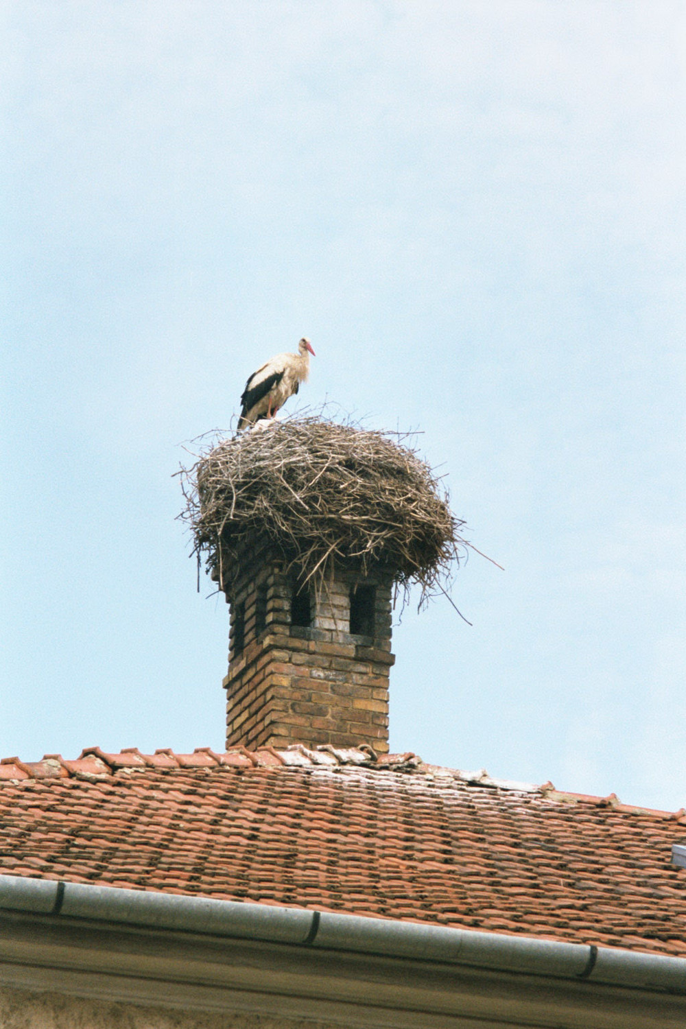A stork on a Hungarian chimney