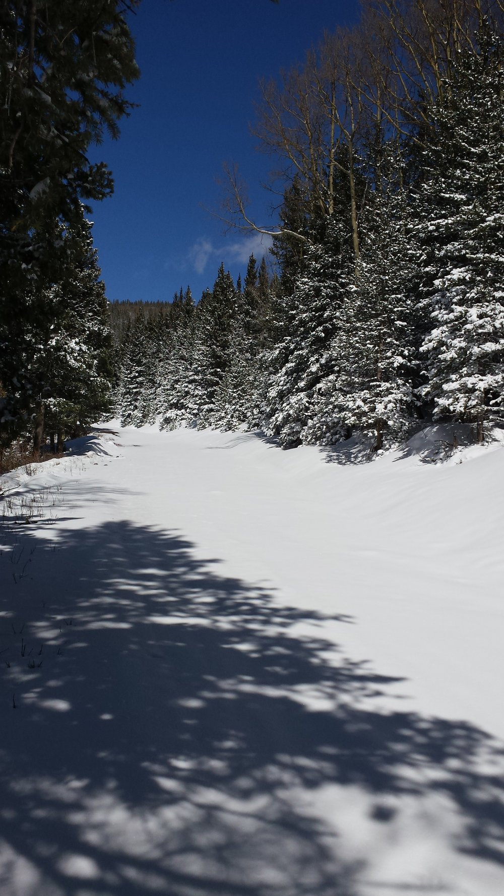 Snowshoes from this point