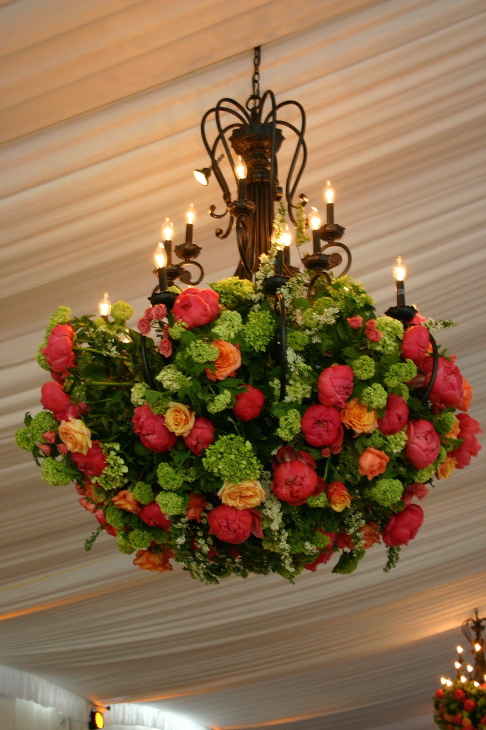 Chandelier flowers - Coral Charm Peonies, Viburnum, Mini Green Hydrangea, Roses and Spirea. Tent and Chandelier from Mahaffey.