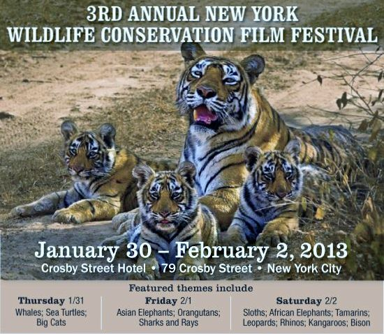 Wildlife Film Festival Schedule 2013