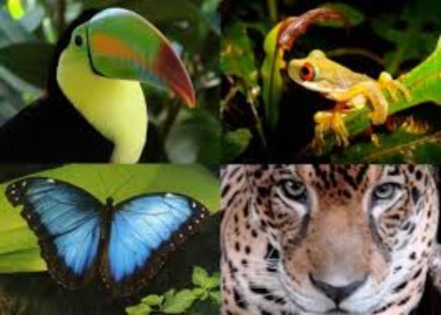 amazon fauna