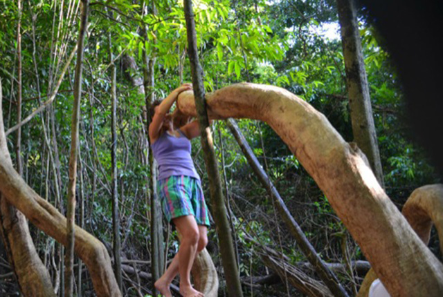 Amazon Rainforest Tree Climbing