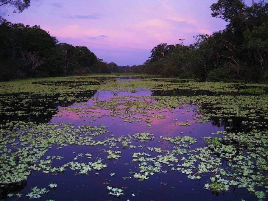 Amazon sunset showing off on the Delfin Amazon Cruise