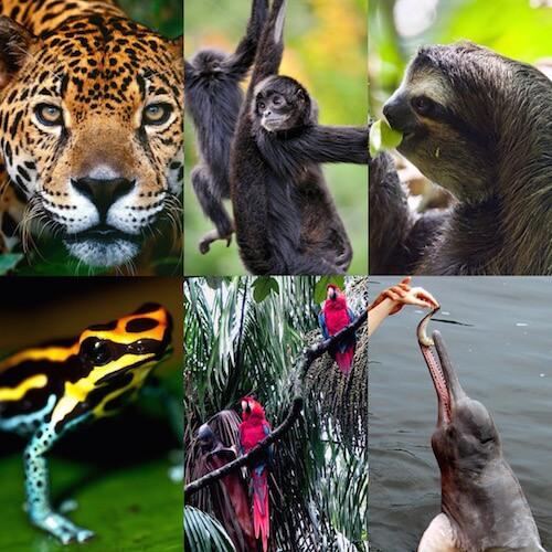 How To Help Endangered Amazon Wildlife | Rainforest Cruises