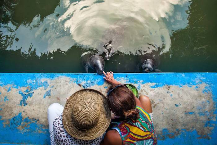 Manatee Rescue Center visit while on the Delfin Amazon River Cruise