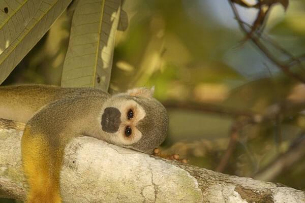 Peralta Pantanal