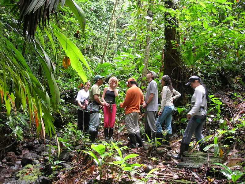 Jungle Trek During Dry Season