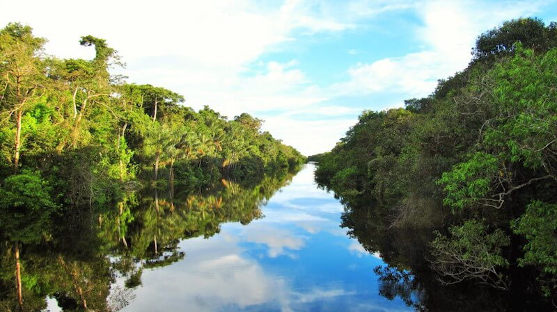 Awapé Amazon Cruise Excursion: Photo from Irv Gerling