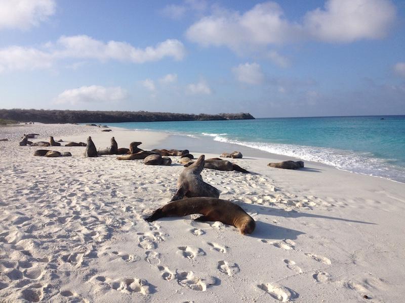 Sealions resting on Española Island, Galapagos