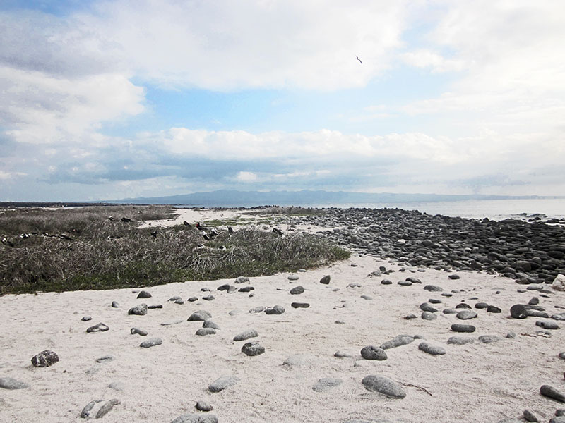 Galapagos white sand beach