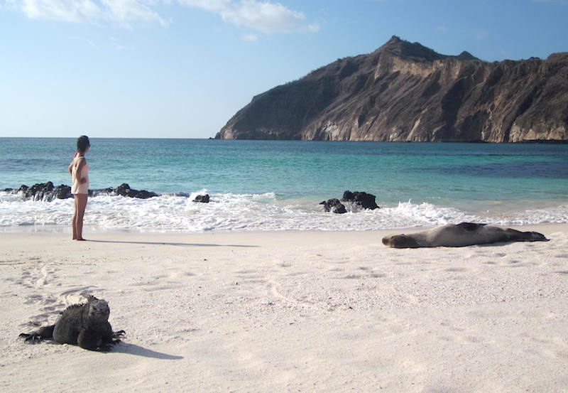 Land Iguanas and Sea lions resting on San Cristobal Island