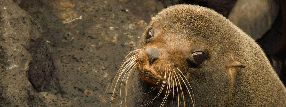 Galapagos creatures