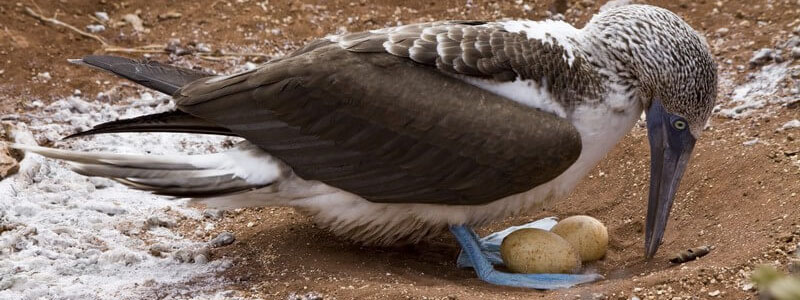Galapagos bird life