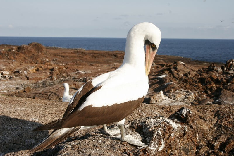 Galapagos bird watching