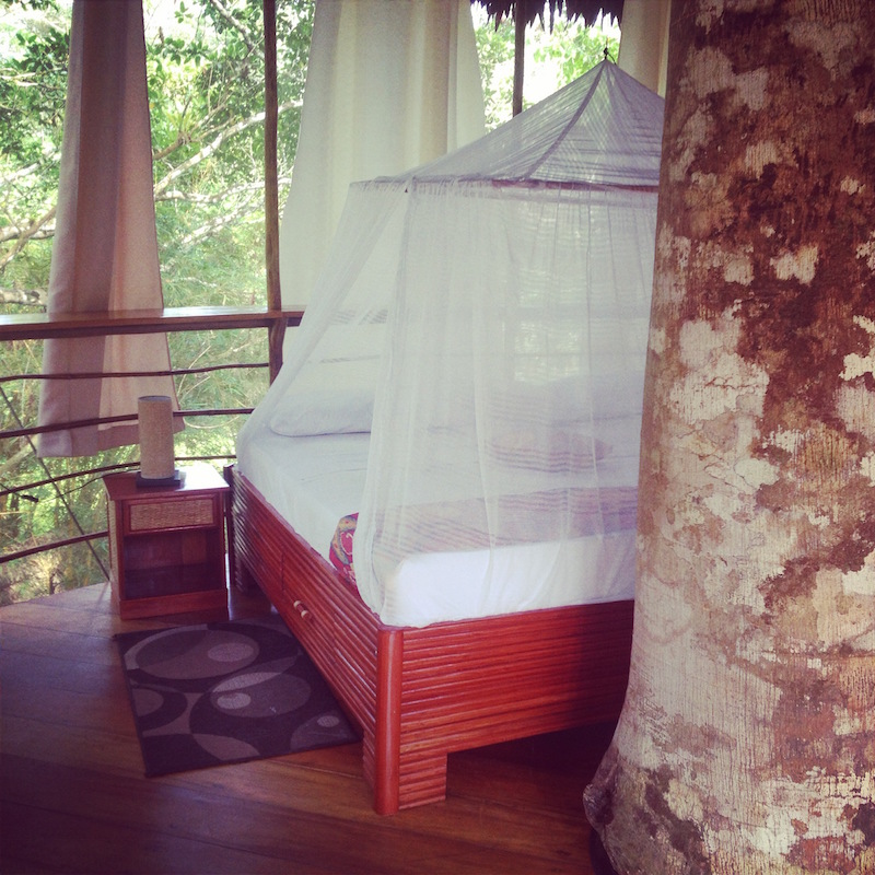 Mosquito netting at the Treehouse Lodge.