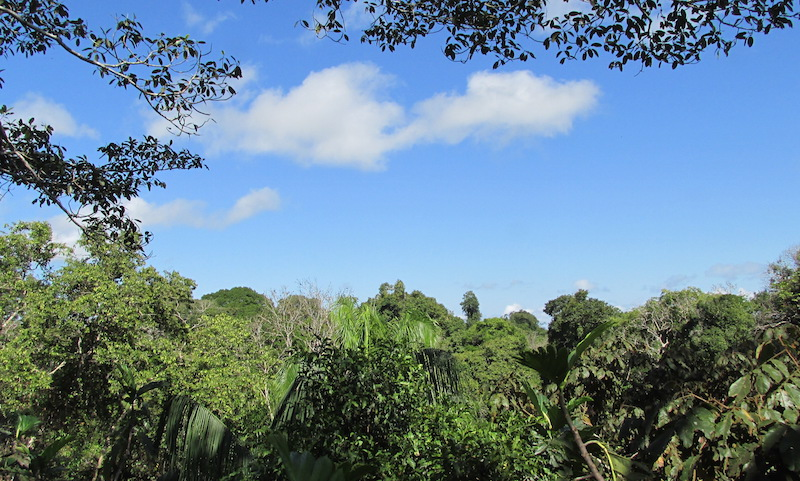 Amazon canopy & Ecosystems of the Amazon Rainforest | Rainforest Cruises