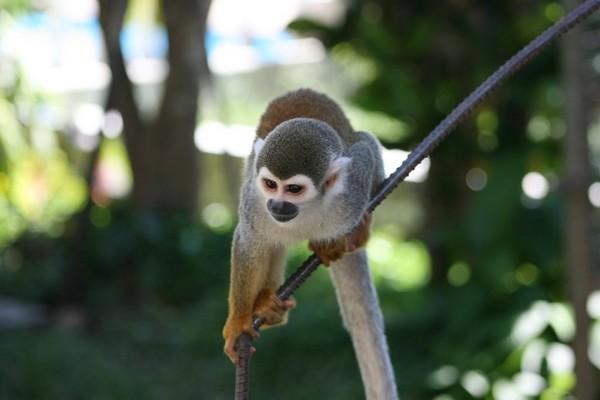 Amazon rainforest monkey