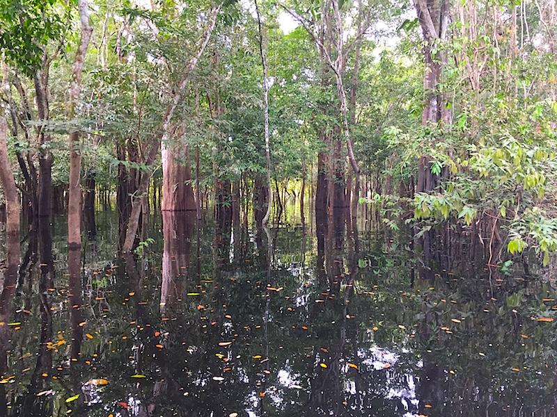 Amazon jungle brazil