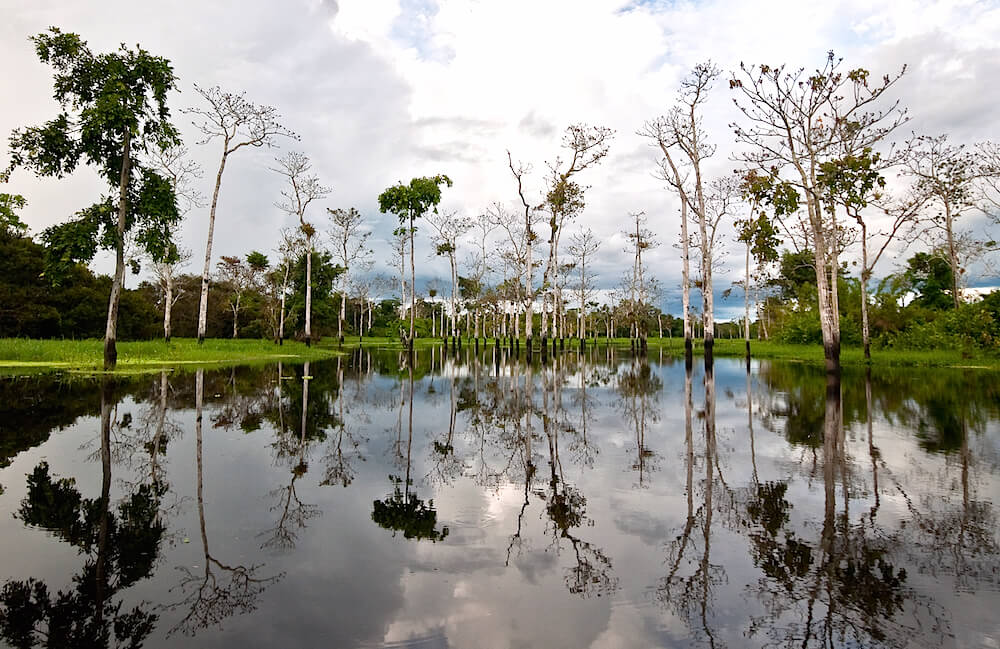 pacaya samiria reserve