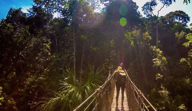 amazon canopy bridge
