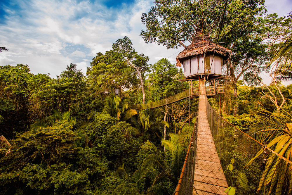 treehouse lodge peru rainforest cruises