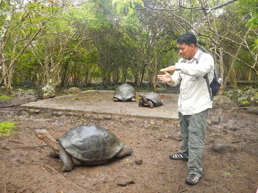 wildlife safety galapagos