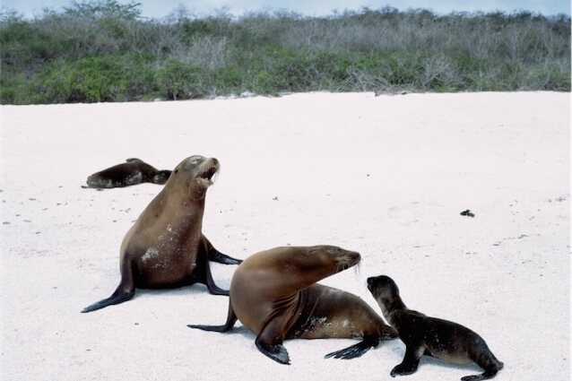 Sealion pups on Galapagos
