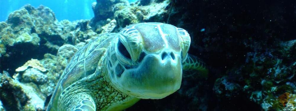 Marine Turtle Galapagos