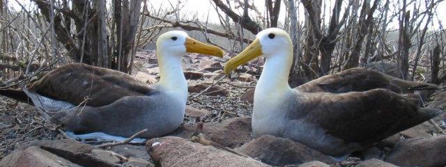Galapagos Wildlife Nemo II Cruise