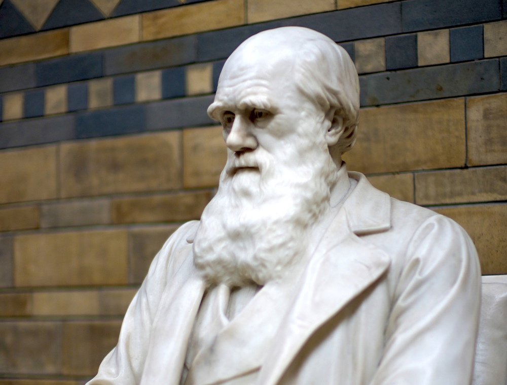 a brief history of darwins theory of evolution The founder of the modern theory of evolution was charles darwin the son and grandson of physicians biography of charles darwin american museum of natural history - biography of charles darwin britannica websites articles from britannica encyclopedias for elementary and high school.