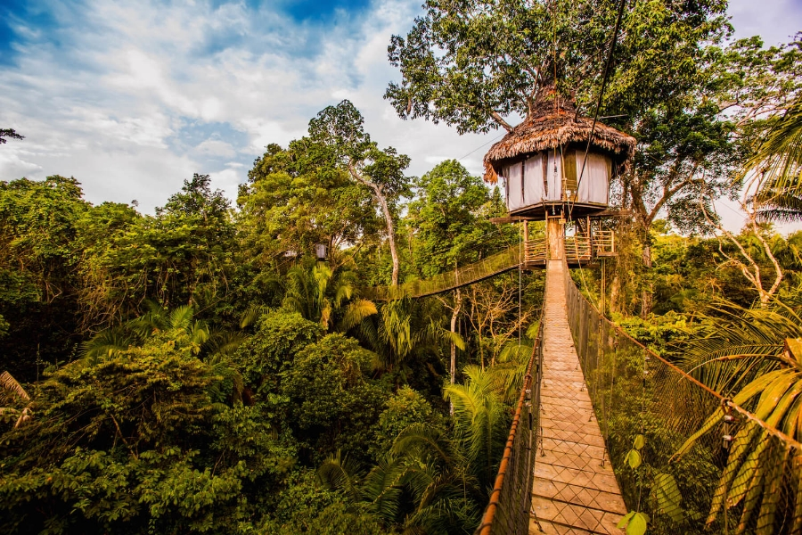Treehouse Lodge Cruise Extension in Peru