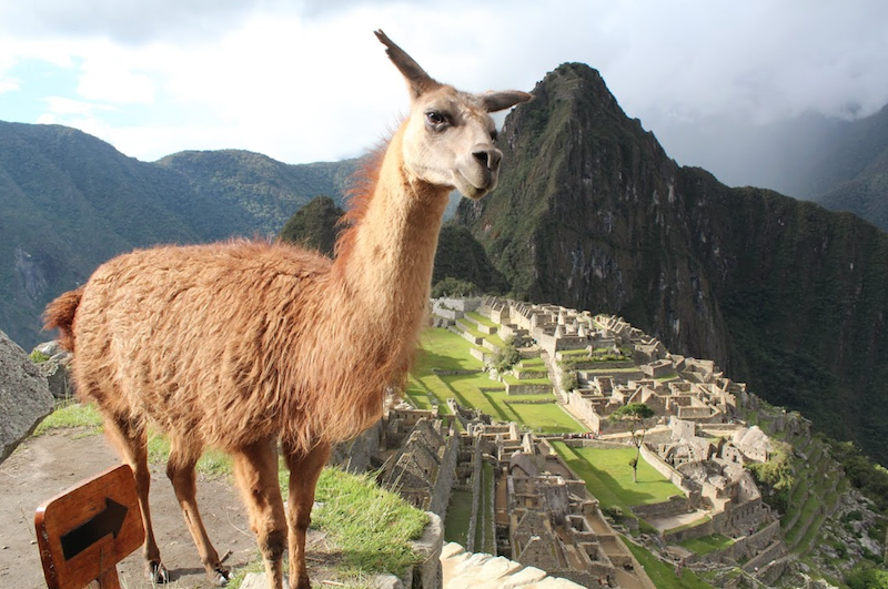 A view of Machu Picchu
