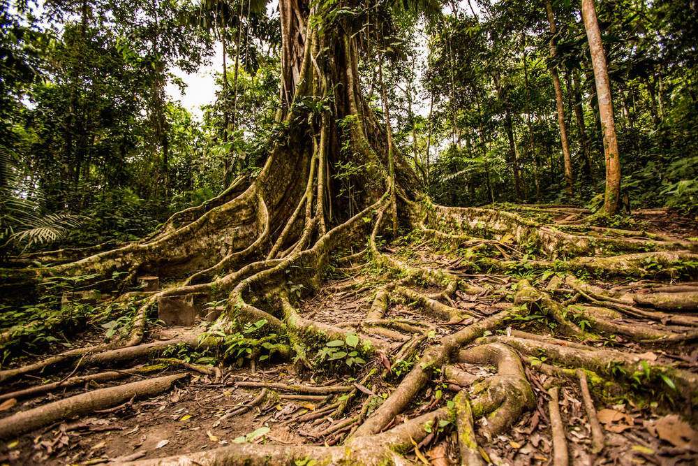 The Amazon jungle to filled with medicinal plants, many of which have not been discovered.