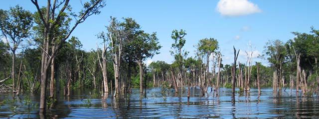 Flooded forest of Brazil's Amazon