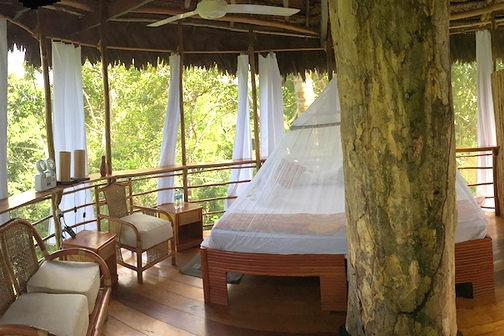 Treehouse Lodge Peru Review