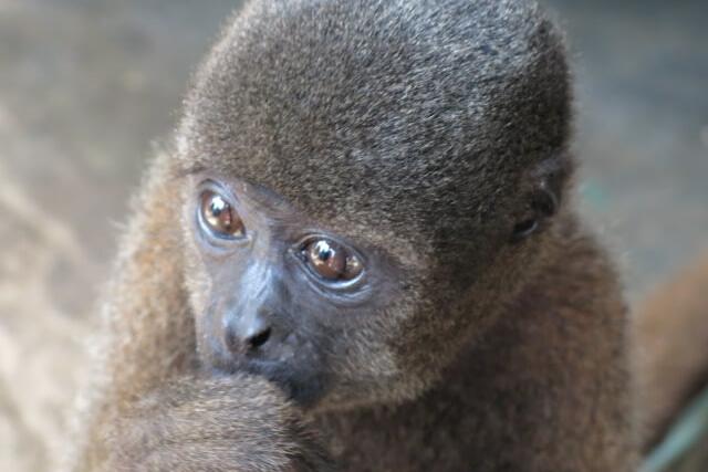 Monkey seen on a 3-day Amazon Cruise on the Selva Viva