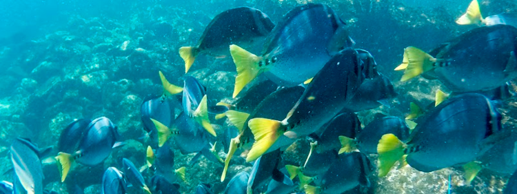 Galapagos snorkeling