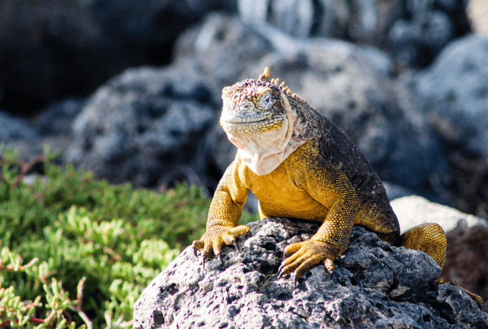 Galapagos wildlife