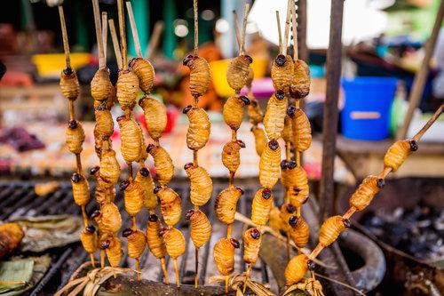 Eating Suri in the Amazon   Rainforest Cruises