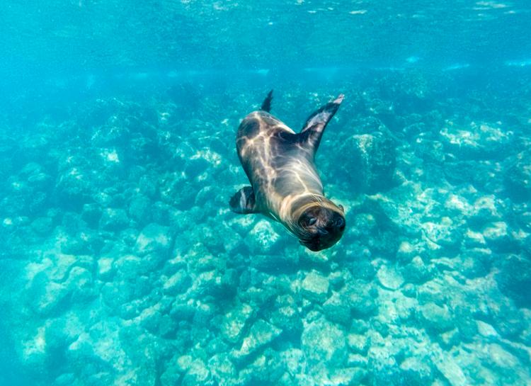 Galapagos Tour Snorkelling