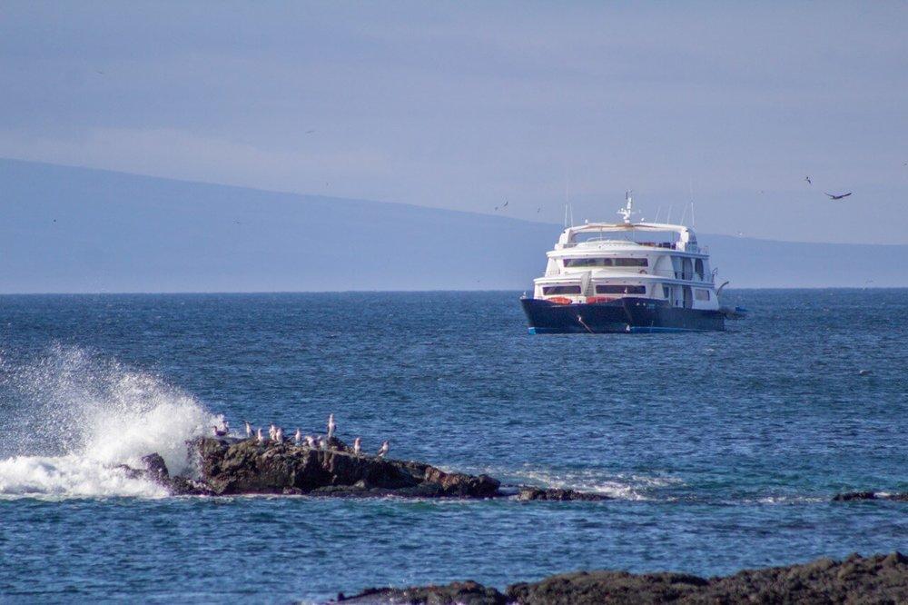 petrel galapagos cruise