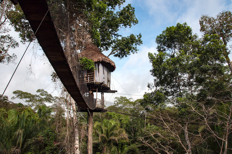 Expert Review: Treehouse Lodge with Rainforest Cruises