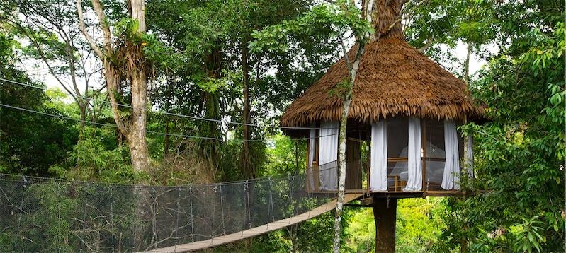 Treehouse10-1-Big.jpg